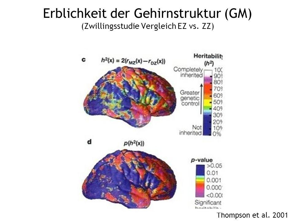 Erblichkeit der Gehirnstruktur (GM) (Zwillingsstudie Vergleich EZ vs