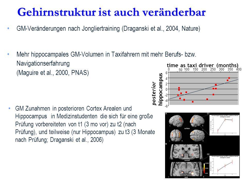 Gehirnstruktur ist auch veränderbar