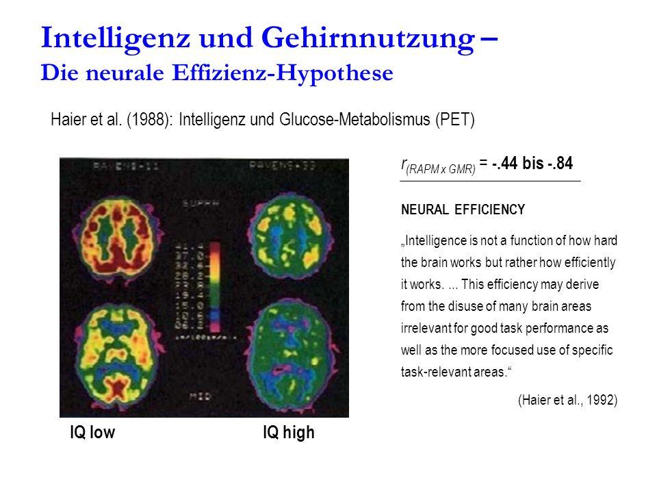 Intelligenz und Gehirnnutzung – Die neurale Effizienz-Hypothese