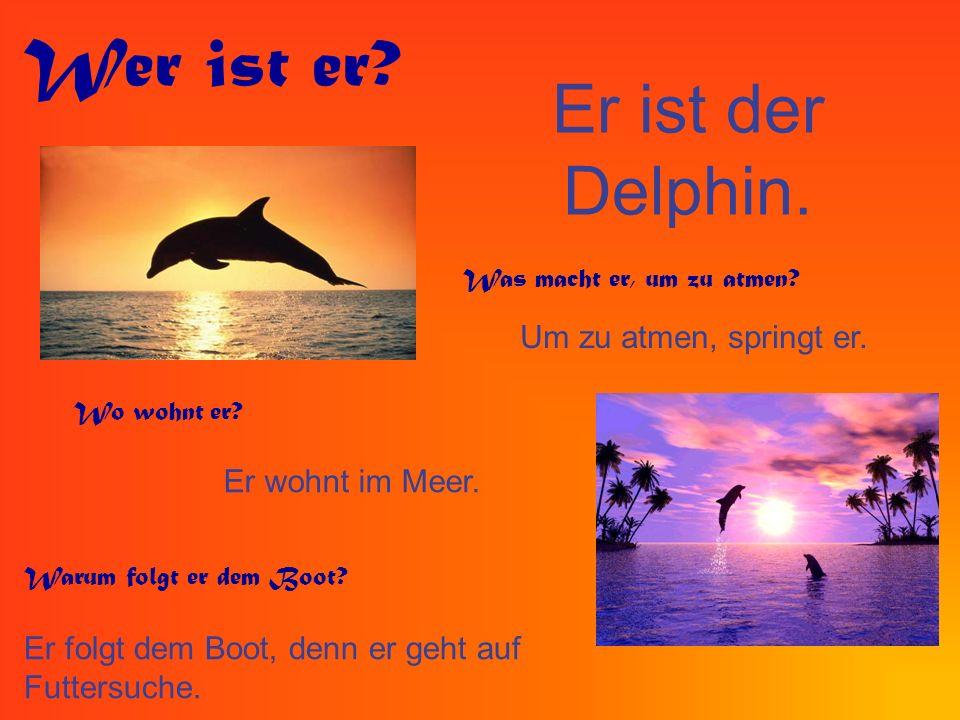 Wer ist er Er ist der Delphin. Um zu atmen, springt er.