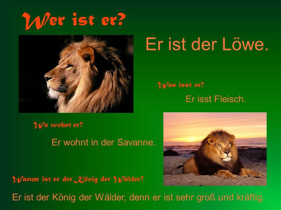 Wer ist er Er ist der Löwe. Er isst Fleisch. Er wohnt in der Savanne.