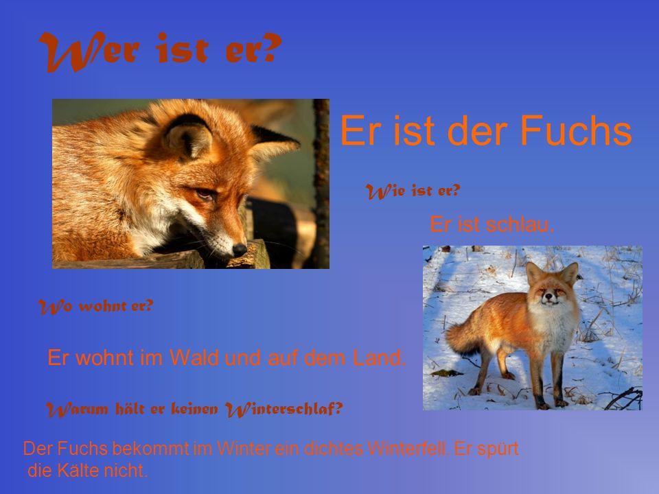 Wer ist er Er ist der Fuchs Er ist schlau.