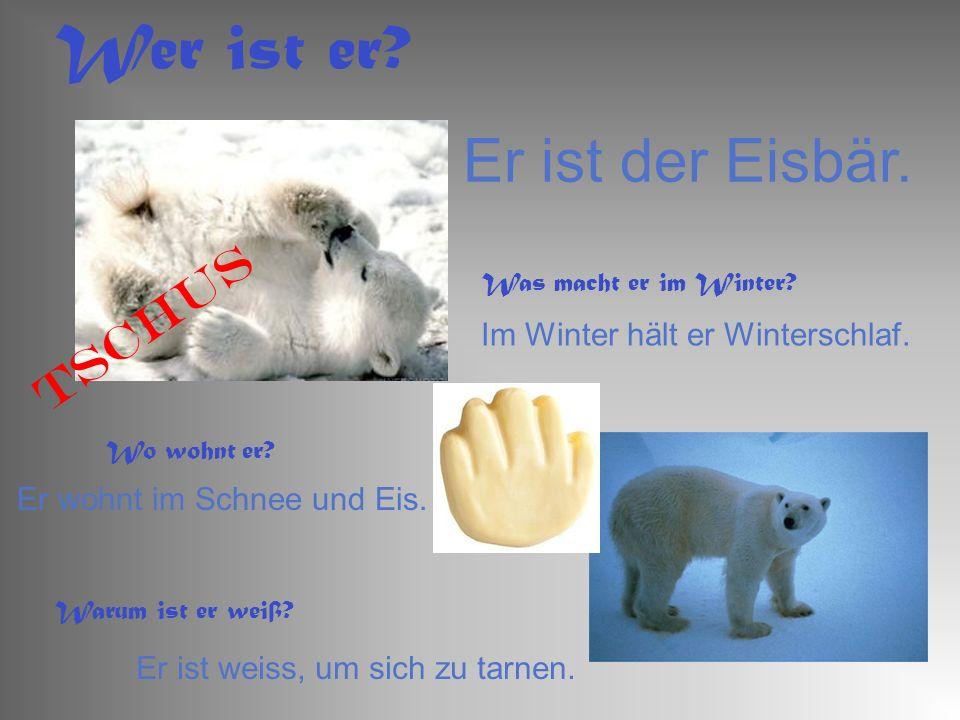 Wer ist er Er ist der Eisbär. Tschus Im Winter hält er Winterschlaf.
