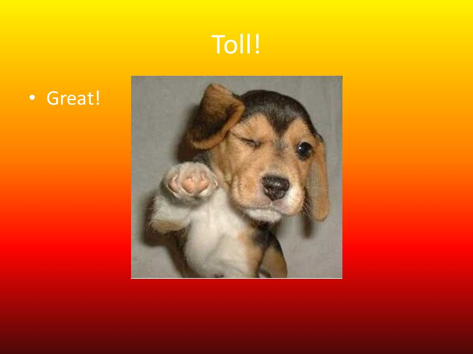 Toll! Great!