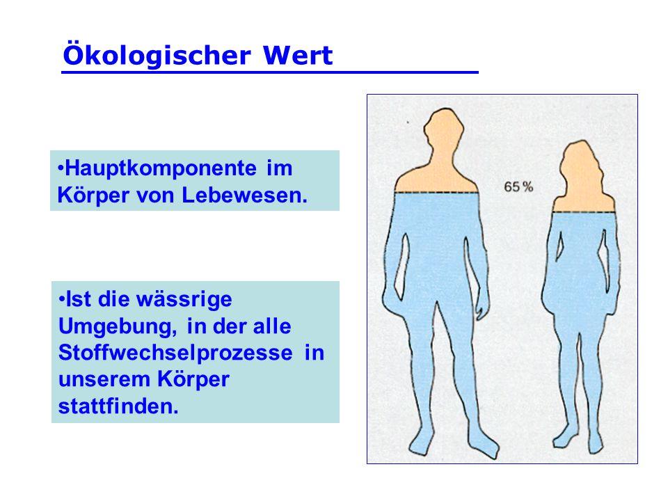 Ökologischer Wert Hauptkomponente im Körper von Lebewesen.