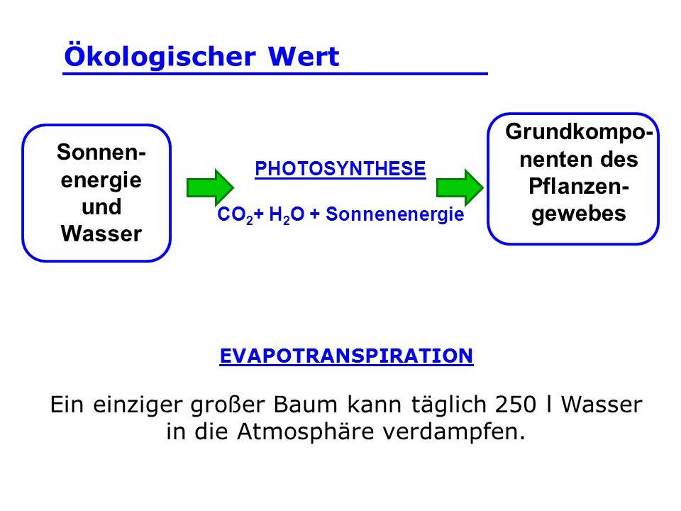 Grundkompo-nenten des Pflanzen-gewebes Sonnen-energie und Wasser