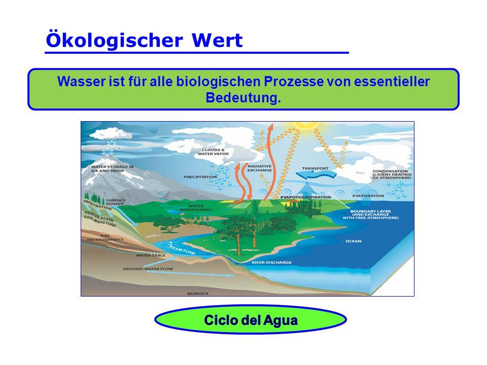 Wasser ist für alle biologischen Prozesse von essentieller Bedeutung.