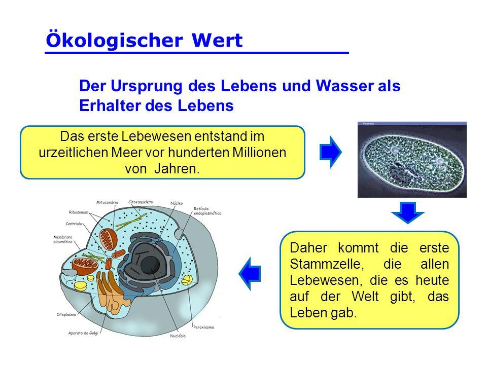 Ökologischer Wert Der Ursprung des Lebens und Wasser als Erhalter des Lebens.