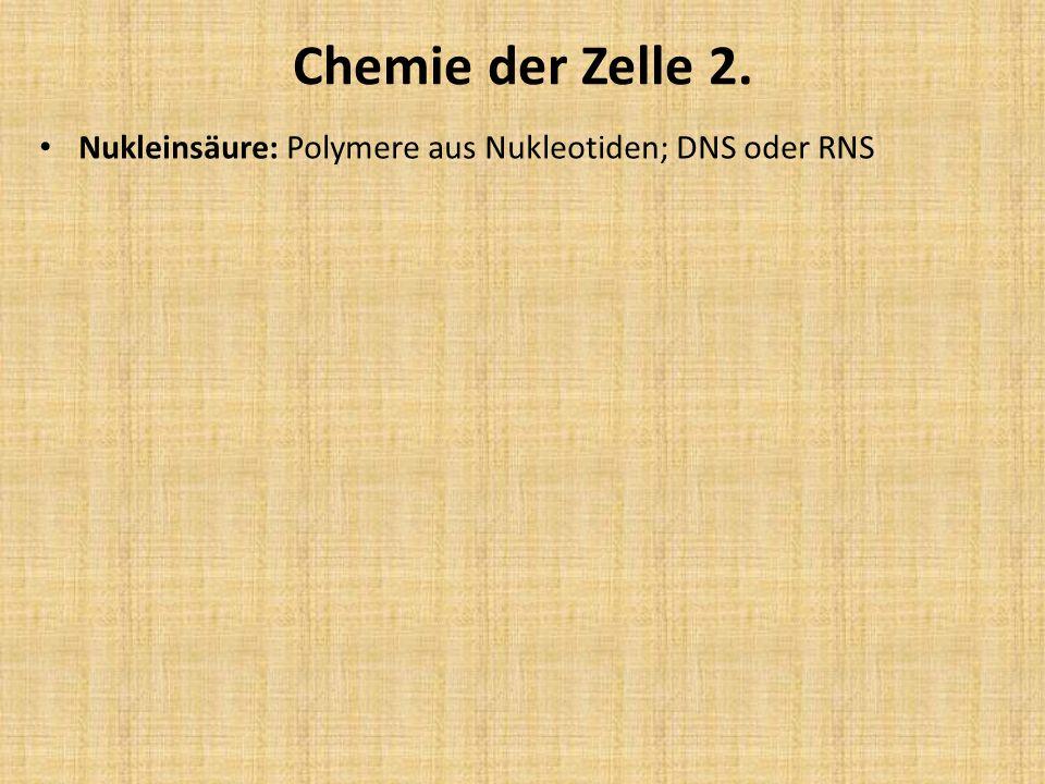 Chemie der Zelle 2. Nukleinsäure: Polymere aus Nukleotiden; DNS oder RNS