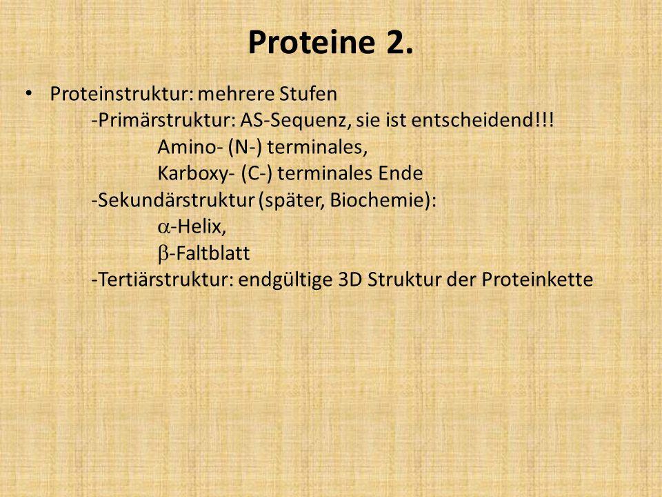 Proteine 2.