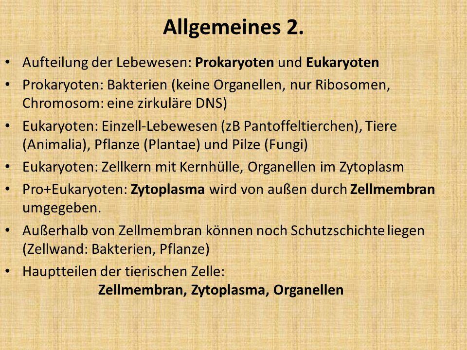 Allgemeines 2. Aufteilung der Lebewesen: Prokaryoten und Eukaryoten