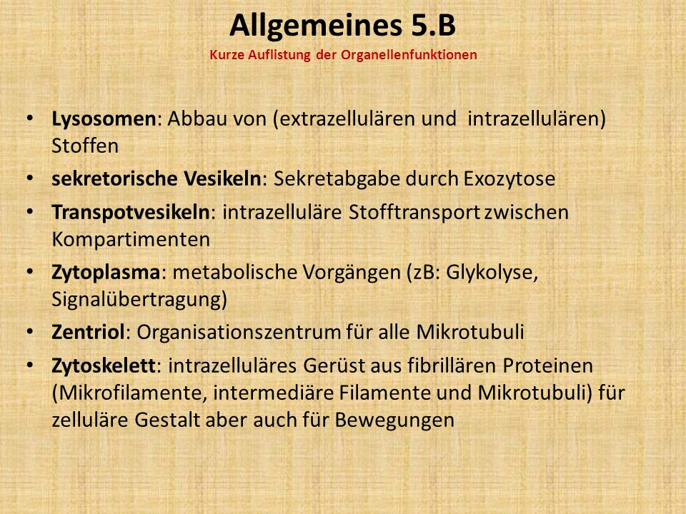 Allgemeines 5.B Kurze Auflistung der Organellenfunktionen