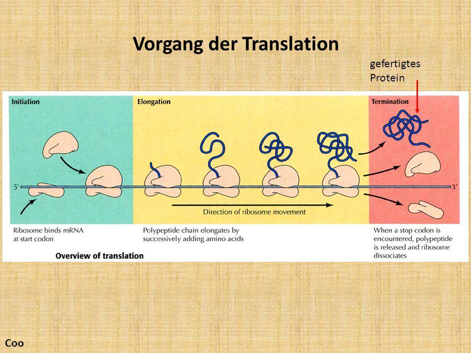 Vorgang der Translation