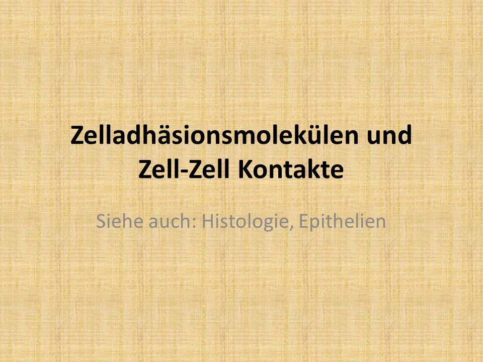 Zelladhäsionsmolekülen und Zell-Zell Kontakte