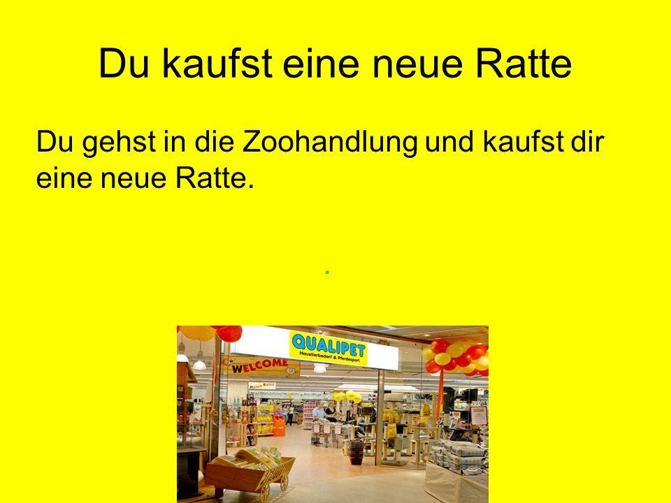 Du kaufst eine neue Ratte
