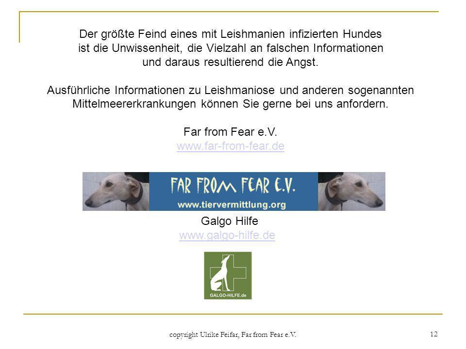 Galgo Hilfe www.galgo-hilfe.de
