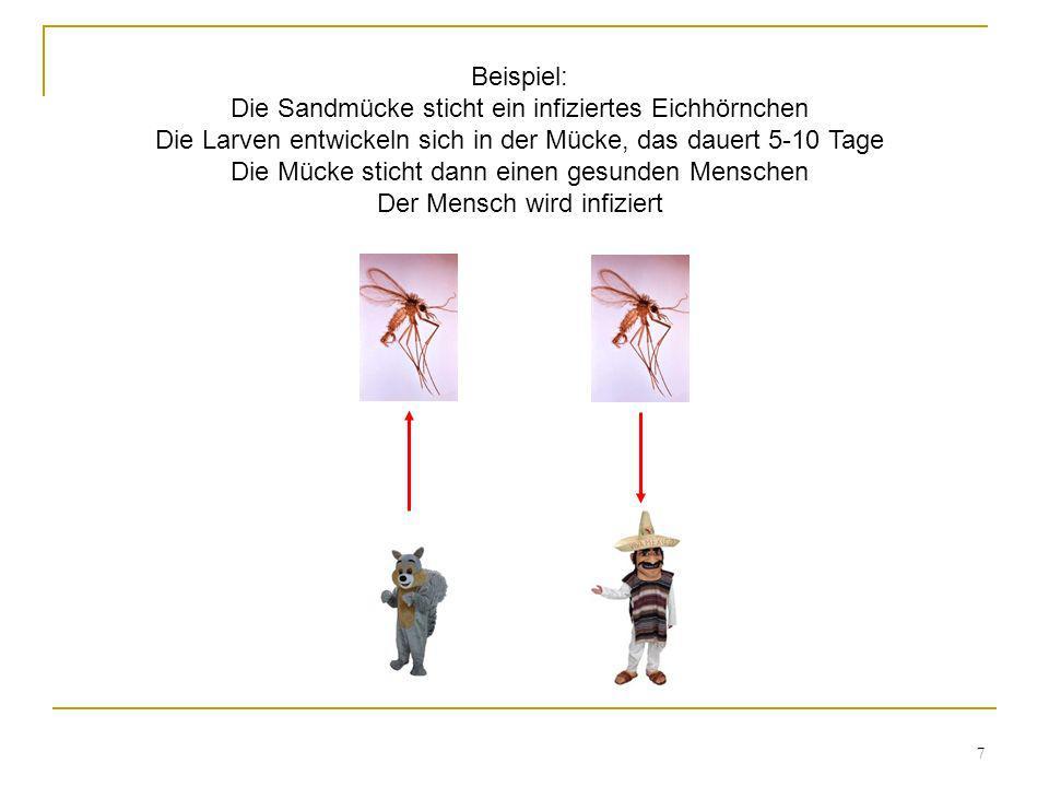 Beispiel: Die Sandmücke sticht ein infiziertes Eichhörnchen Die Larven entwickeln sich in der Mücke, das dauert 5-10 Tage Die Mücke sticht dann einen gesunden Menschen Der Mensch wird infiziert
