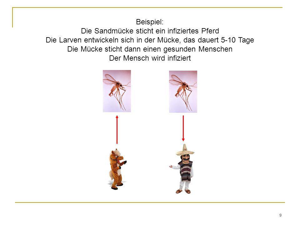 Beispiel: Die Sandmücke sticht ein infiziertes Pferd Die Larven entwickeln sich in der Mücke, das dauert 5-10 Tage Die Mücke sticht dann einen gesunden Menschen Der Mensch wird infiziert