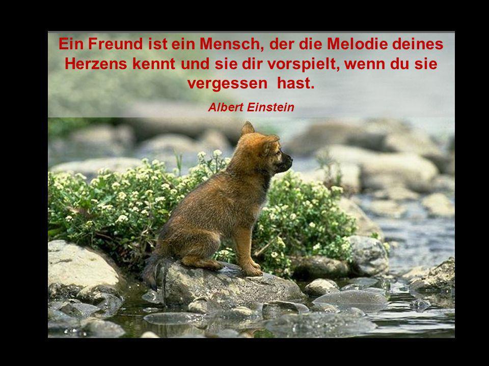 Ein Freund ist ein Mensch, der die Melodie deines Herzens kennt und sie dir vorspielt, wenn du sie vergessen hast.