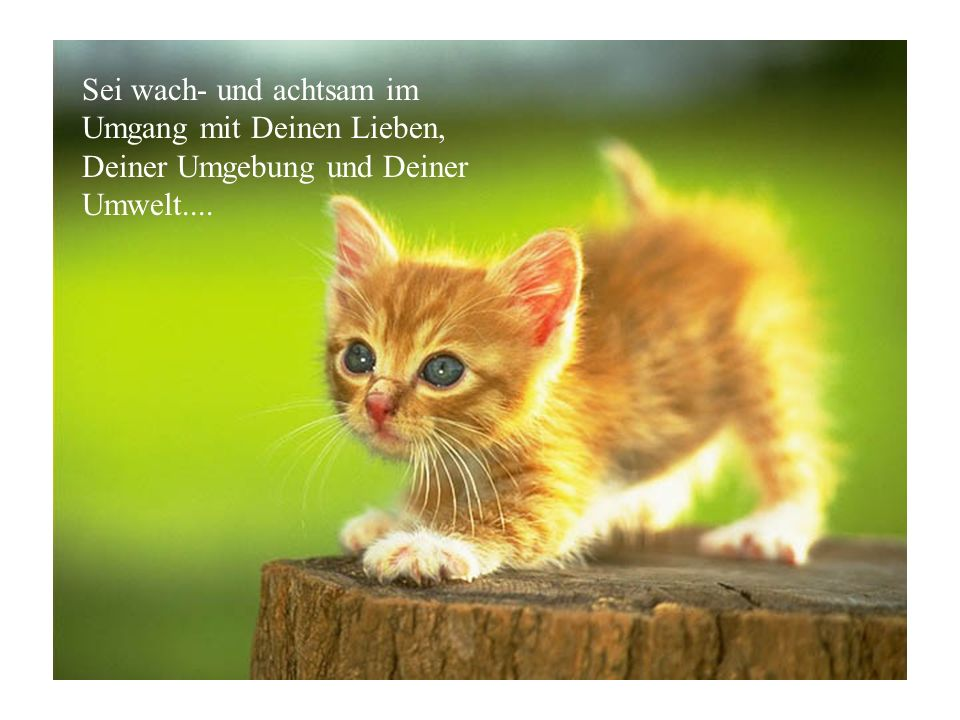 Sei wach- und achtsam im Umgang mit Deinen Lieben, Deiner Umgebung und Deiner Umwelt....