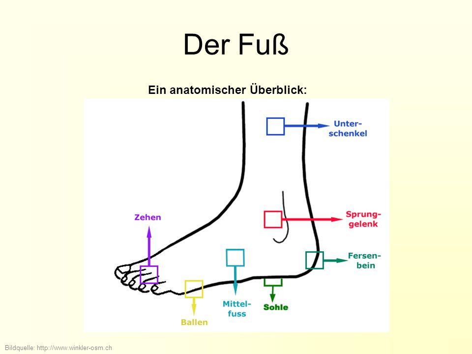 Der Fuß Ein anatomischer Überblick: