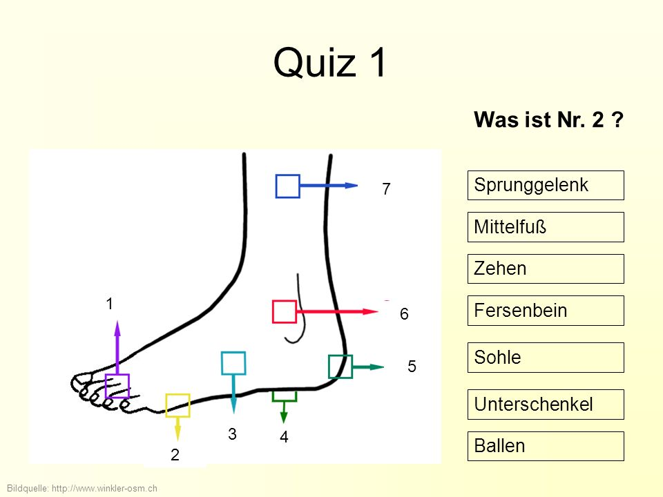 Quiz 1 Was ist Nr. 2 Sprunggelenk Mittelfuß Zehen Fersenbein Sohle
