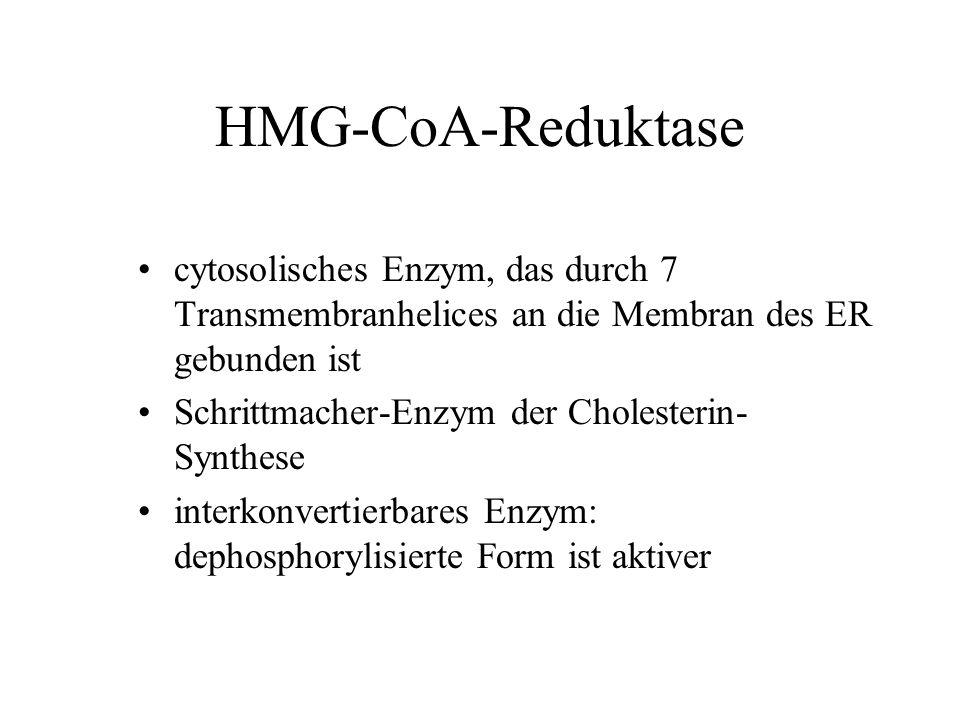 HMG-CoA-Reduktase cytosolisches Enzym, das durch 7 Transmembranhelices an die Membran des ER gebunden ist.