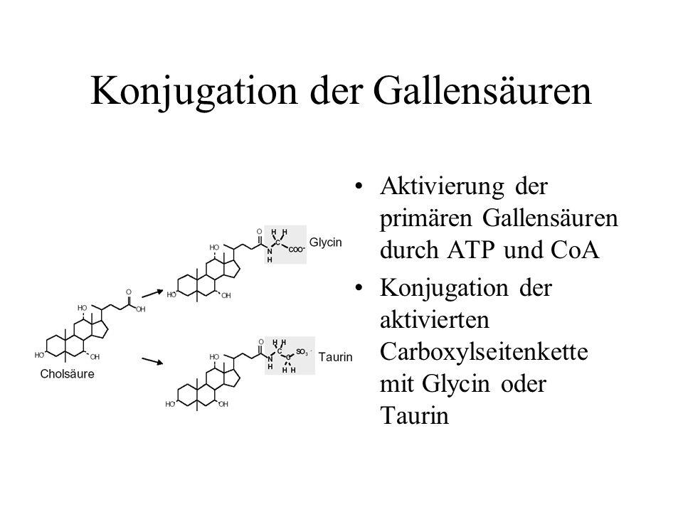 Konjugation der Gallensäuren