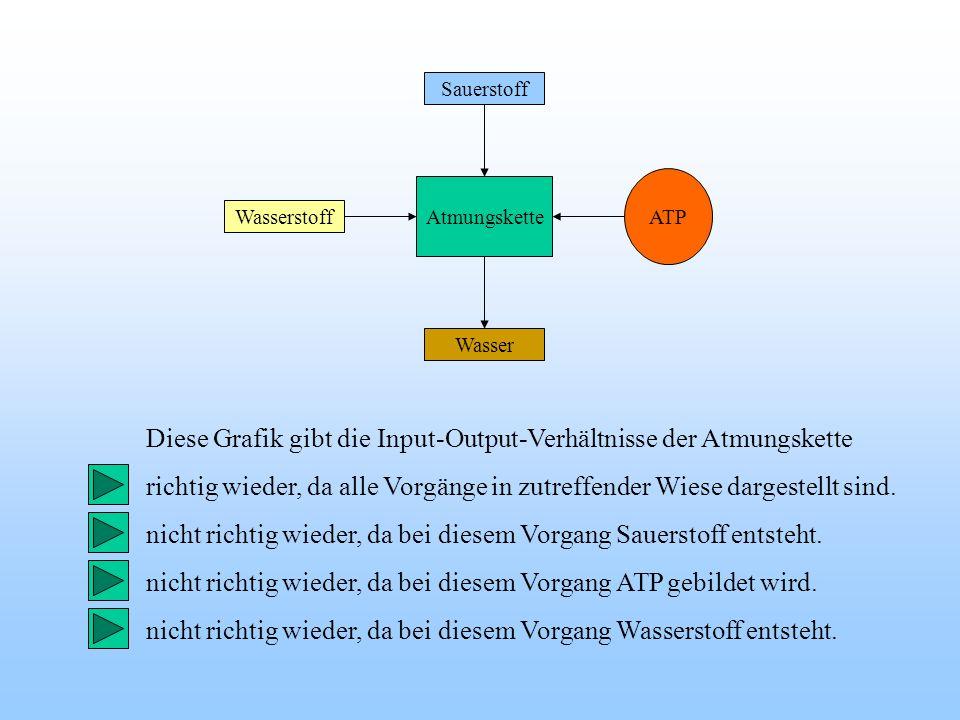 Diese Grafik gibt die Input-Output-Verhältnisse der Atmungskette