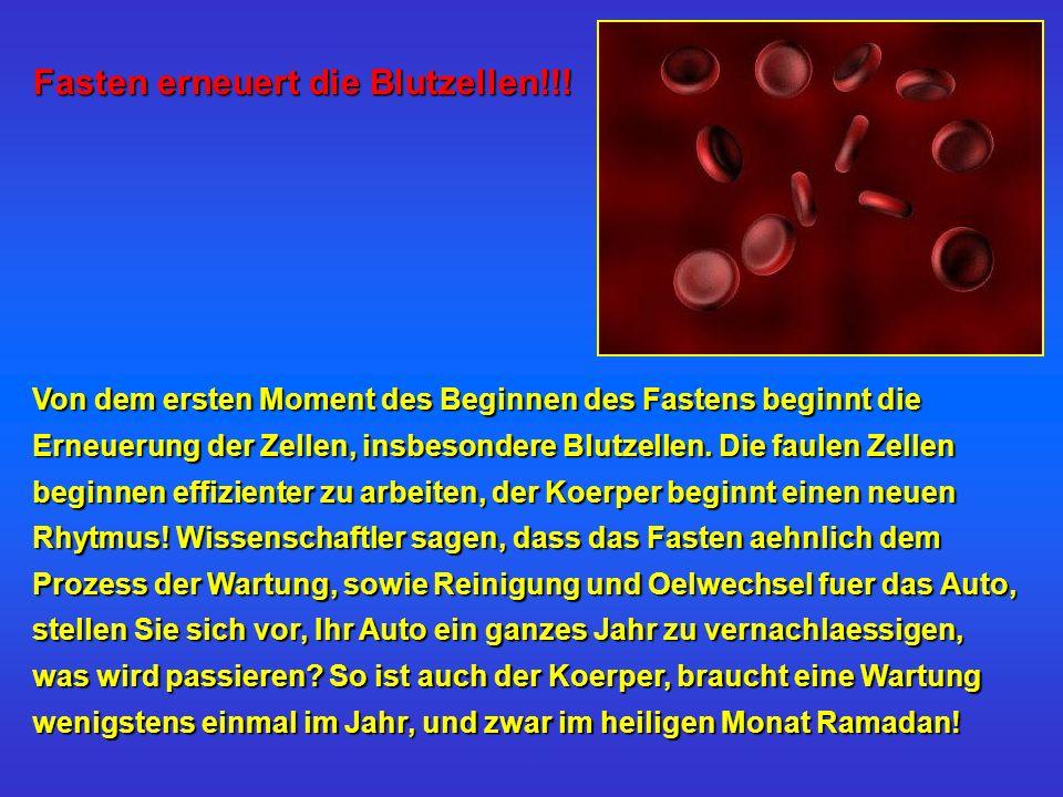 Fasten erneuert die Blutzellen