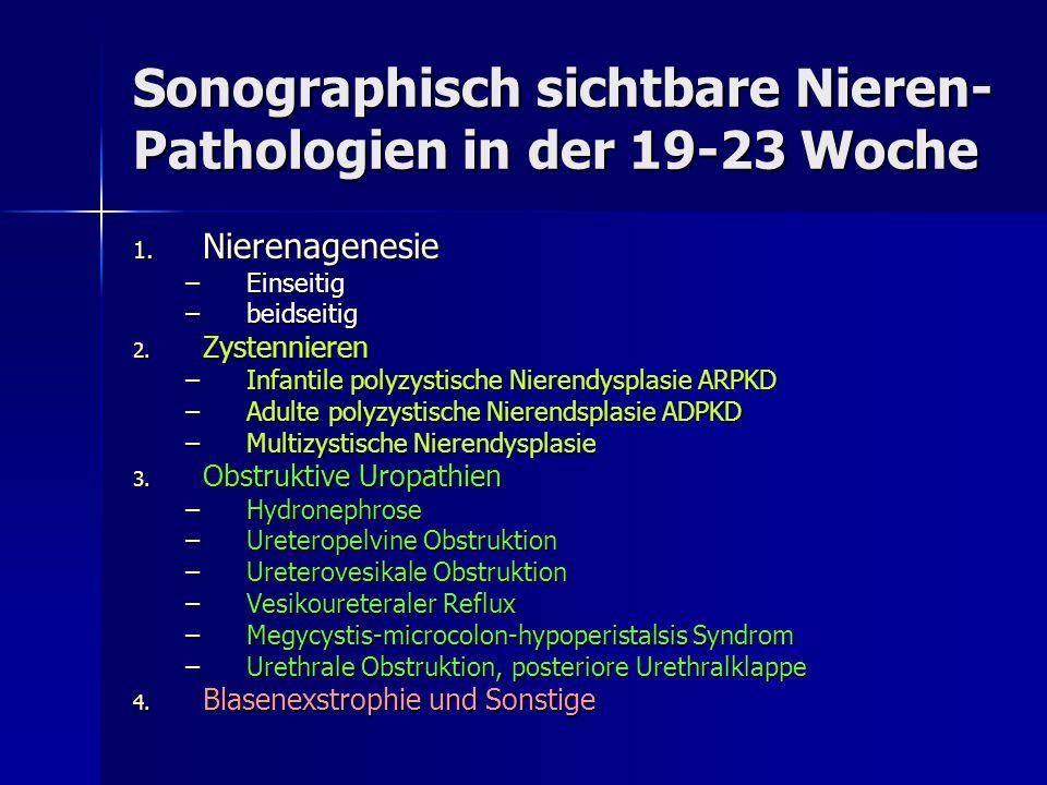 Sonographisch sichtbare Nieren-Pathologien in der 19-23 Woche