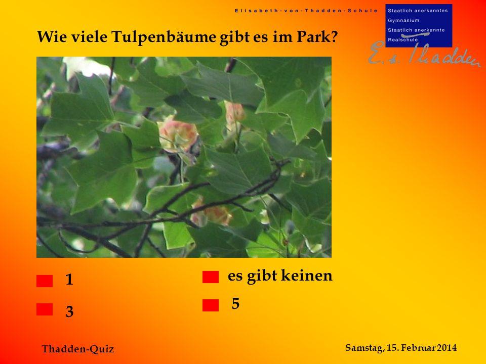 Wie viele Tulpenbäume gibt es im Park