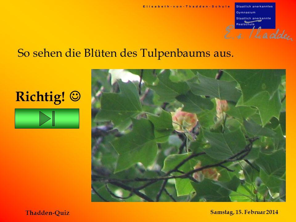 Richtig!  So sehen die Blüten des Tulpenbaums aus. Thadden-Quiz
