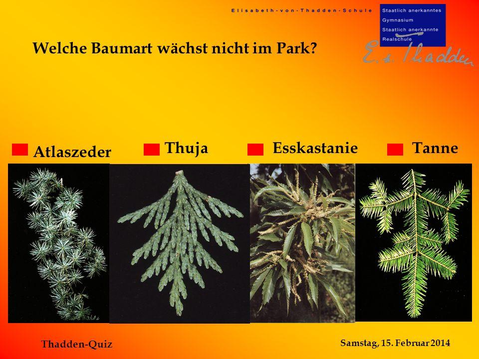 Welche Baumart wächst nicht im Park