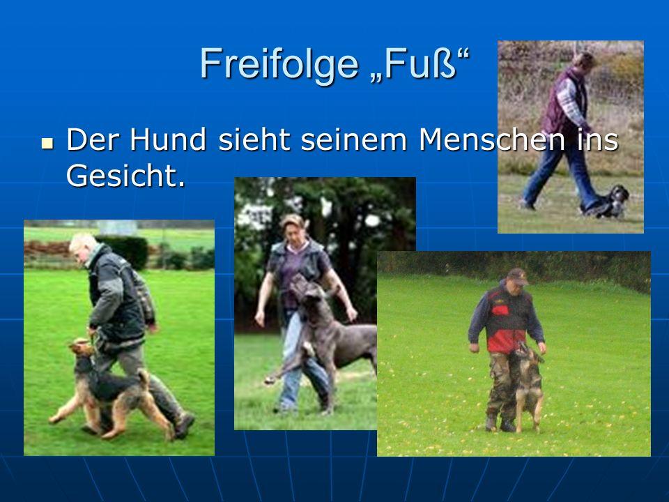 """Freifolge """"Fuß Der Hund sieht seinem Menschen ins Gesicht."""