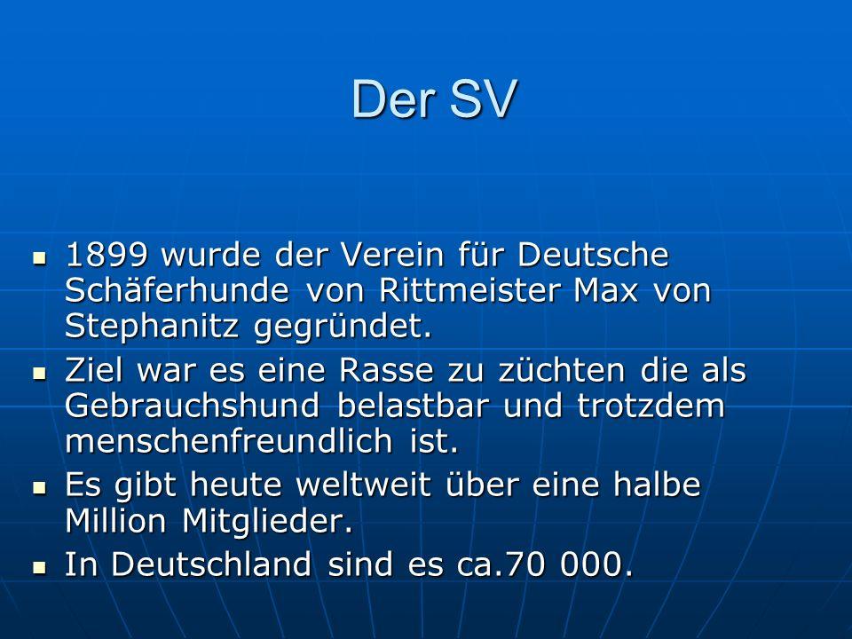Der SV 1899 wurde der Verein für Deutsche Schäferhunde von Rittmeister Max von Stephanitz gegründet.
