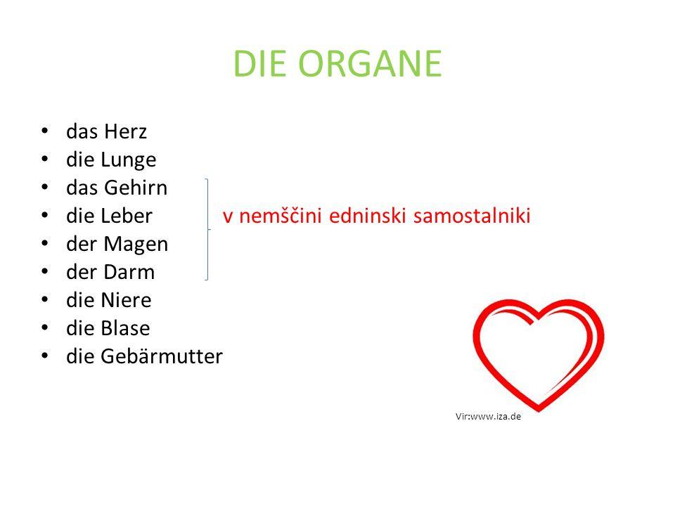 DIE ORGANE das Herz die Lunge das Gehirn