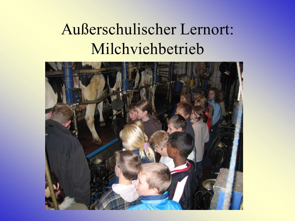 Außerschulischer Lernort: Milchviehbetrieb