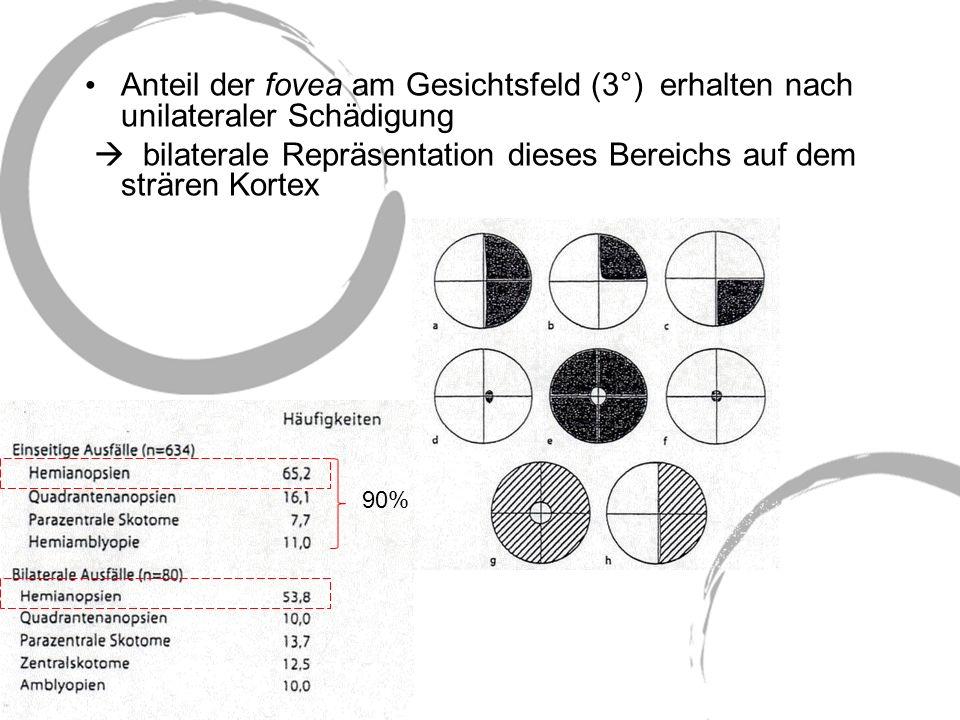  bilaterale Repräsentation dieses Bereichs auf dem strären Kortex
