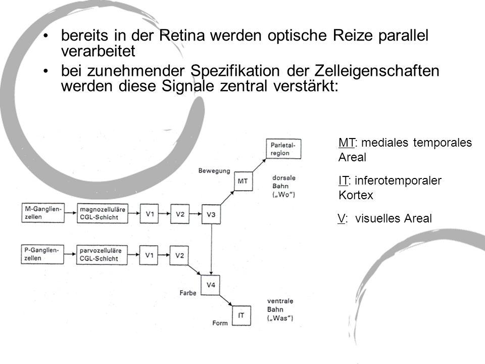 bereits in der Retina werden optische Reize parallel verarbeitet