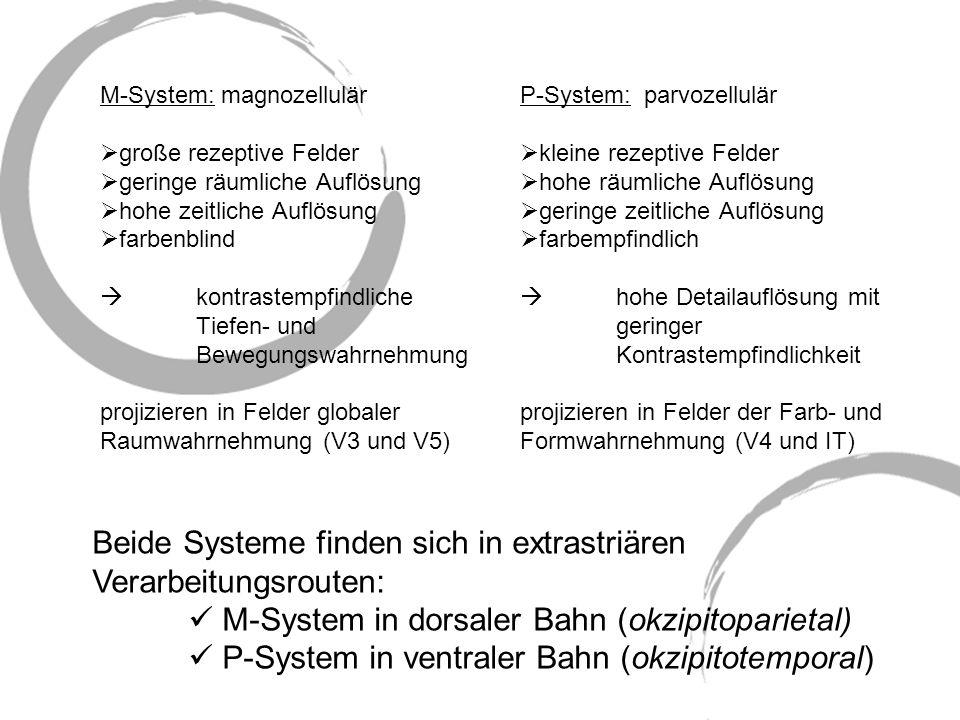 Beide Systeme finden sich in extrastriären Verarbeitungsrouten: