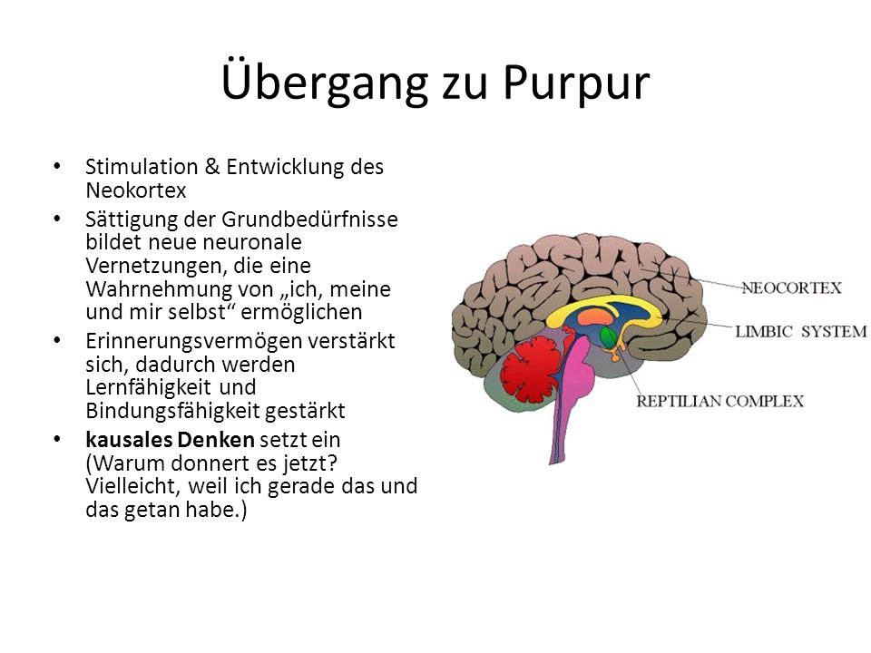 Übergang zu Purpur Stimulation & Entwicklung des Neokortex