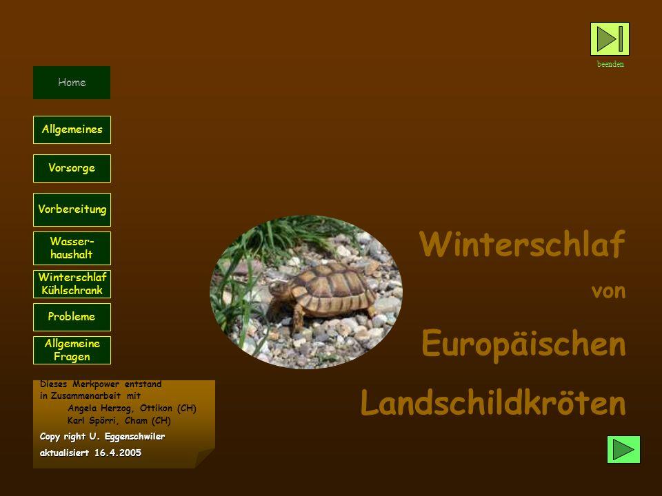 Winterschlaf Europäischen Landschildkröten von Home Allgemeines