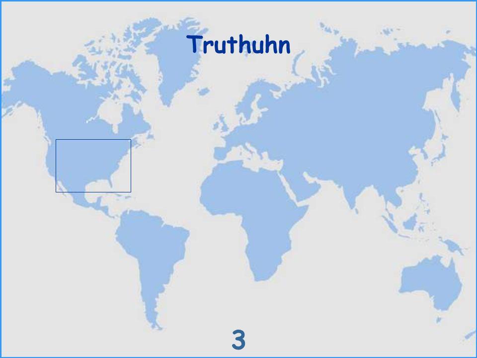 Truthuhn 3