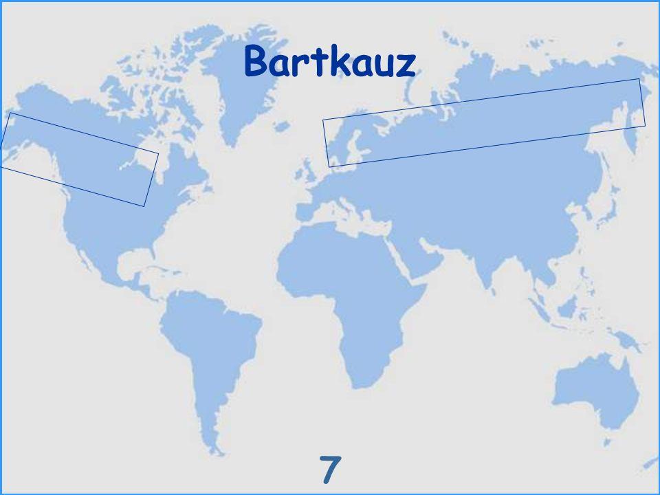 Bartkauz 7
