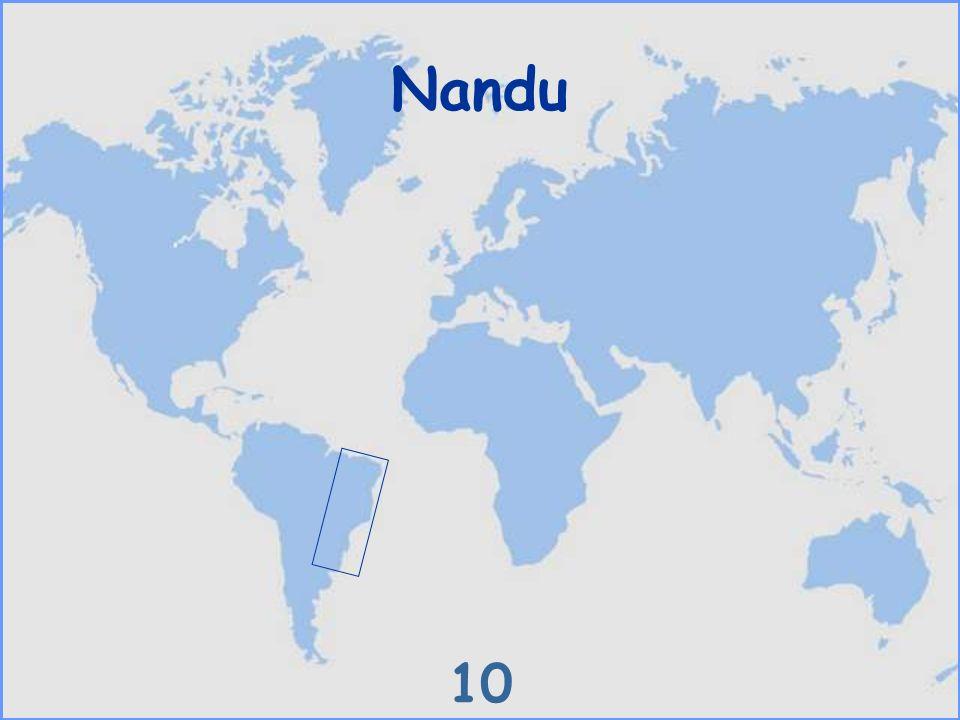 Nandu 10