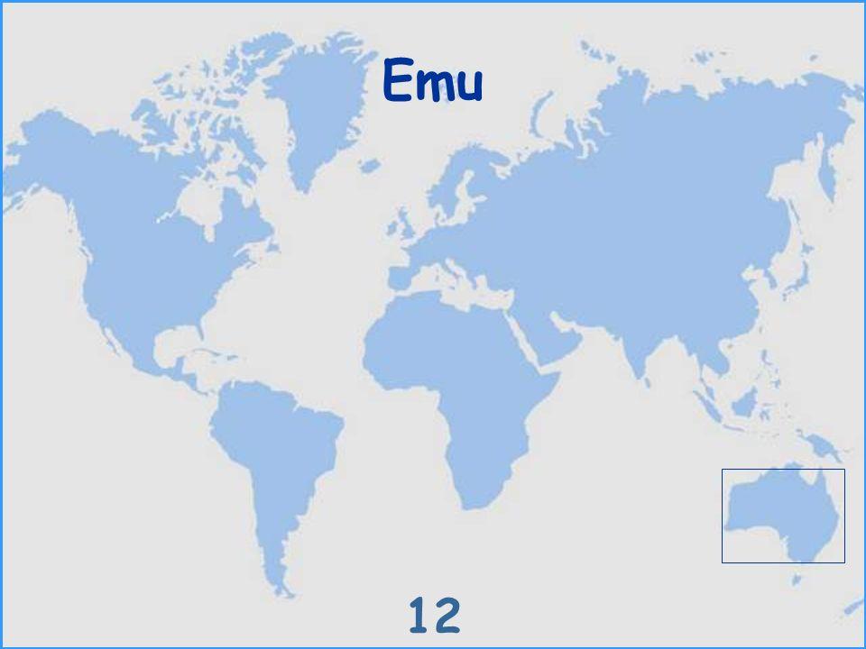 Emu 12