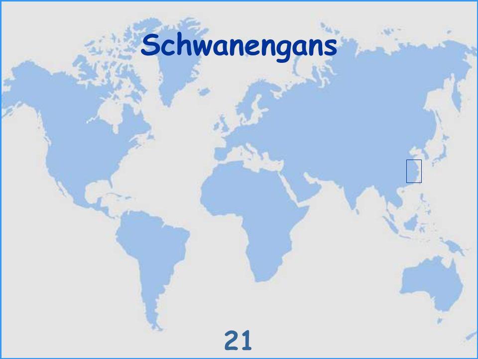 Schwanengans 21