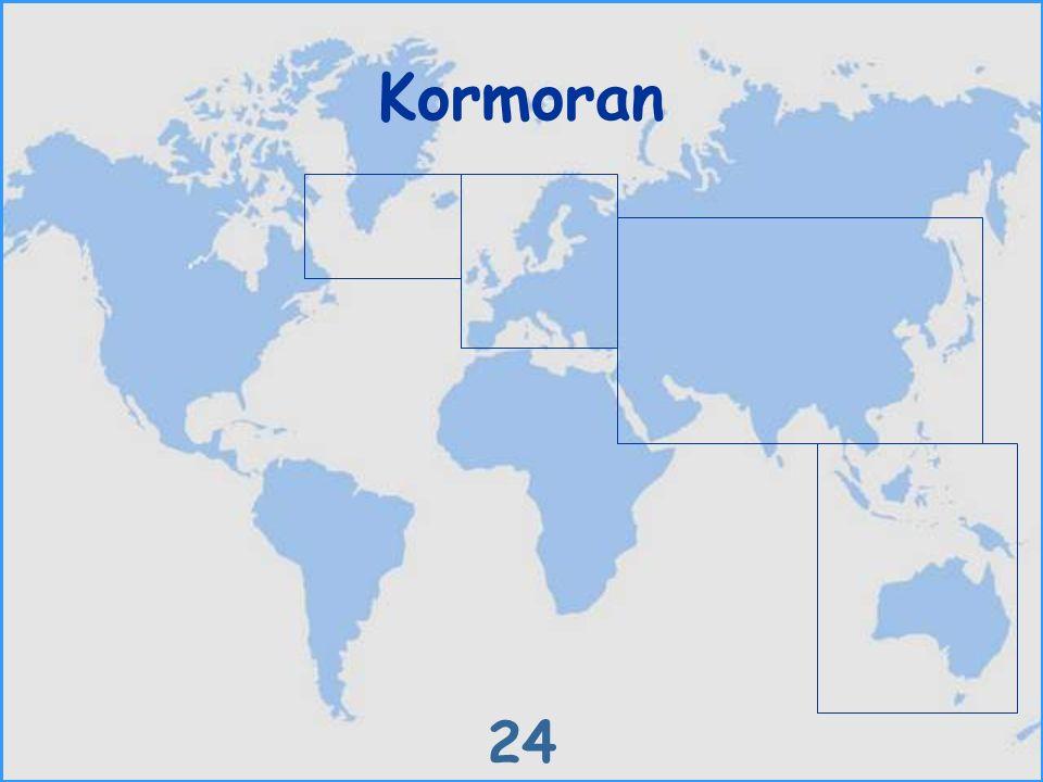 Kormoran 24