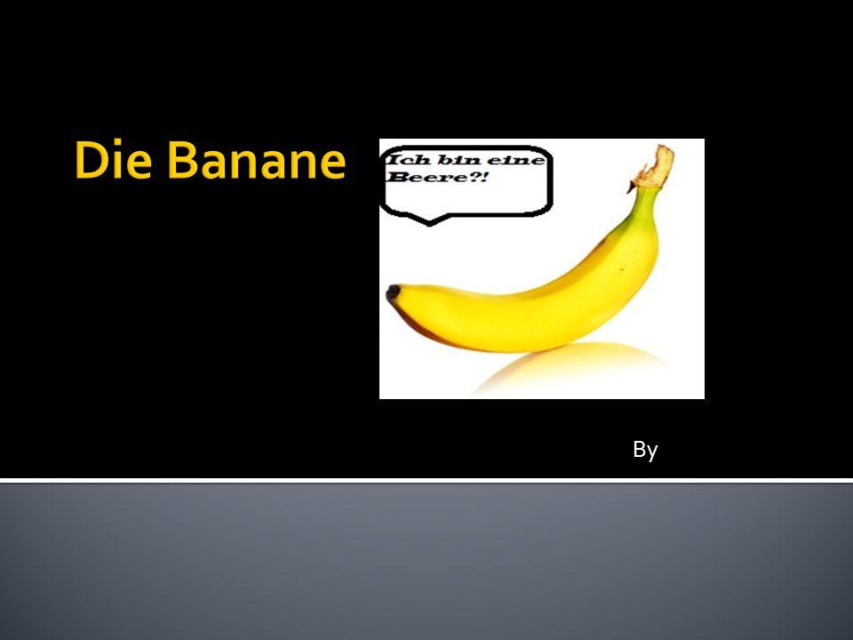 Die Banane By